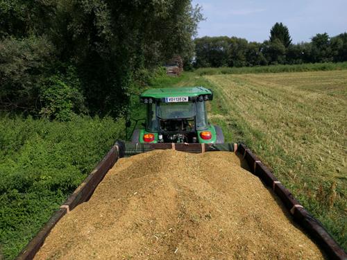 Quinoa Ernte Steiermark